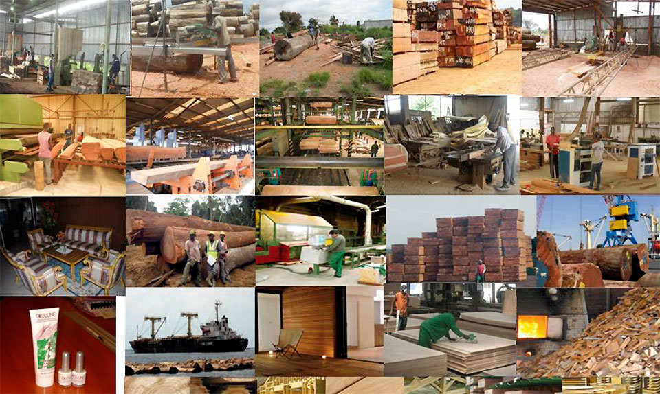 Overview of the private sector players in the Forest-Wood sector in Gabon