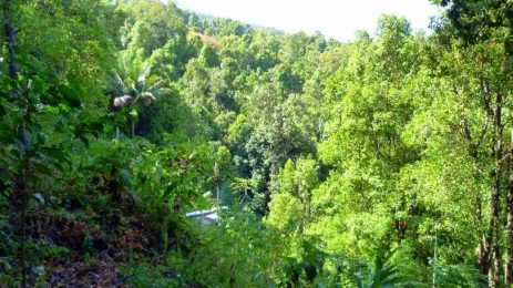 Clove and nutmeg based agroforest with fruit trees and timber, in Ternate, Moluccas, Indonesia