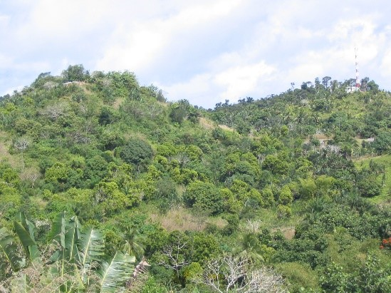 Agroforest with cloves, fruit trees and fuel wood, East Coast, Fénérive-Est, Madagascar