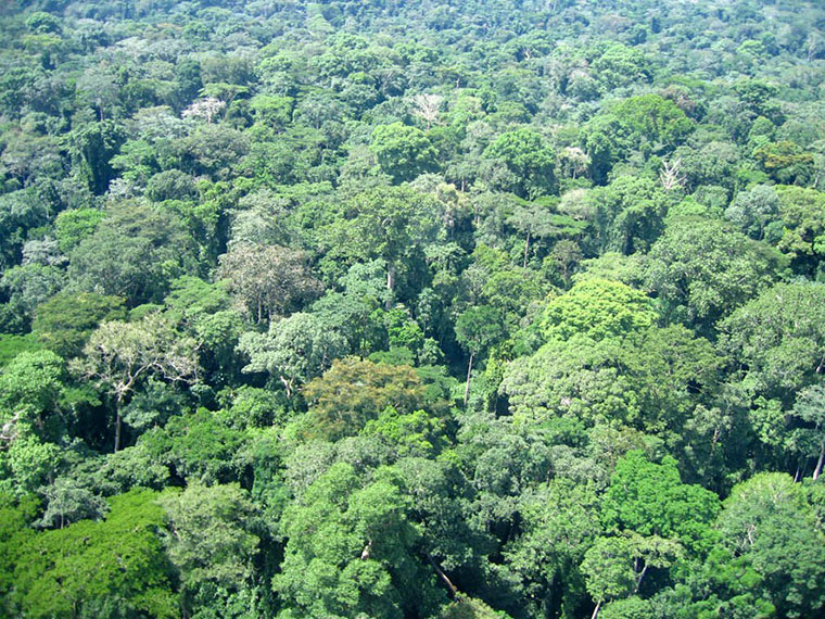 Deforestation is a political choice, but not a goal