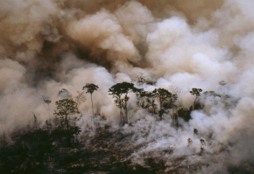 "WWF publishes its ""Deforestation fronts"" report"