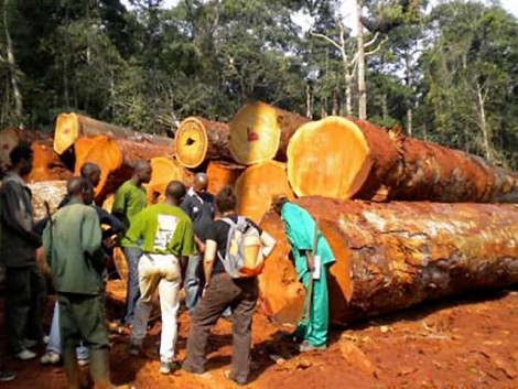 Cameroon: MINFOF suspends 20 wood processing units for complicity in illegal logging