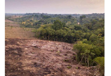 A WWF study points out the responsibility of the European Union in the degradation of tropical forests