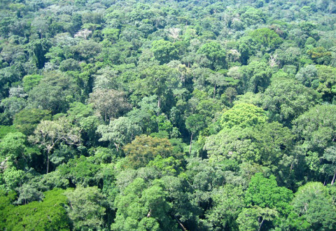 Tropical forests - the facts and figures