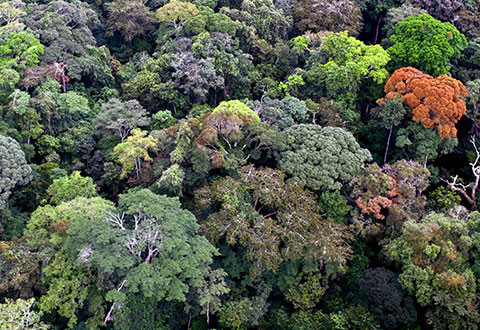 Preserving forest resources by harvesting less than is naturally grown